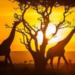 Eco-tourism in Kenya: 6 Amazing Experiences
