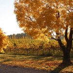 Why you need to visit Central NSW this autumn