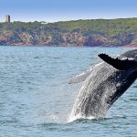 Romance on the Bay: Escape to New South Wales' magical Eden