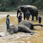 Articles Luxury, Adventure and Culture in Chiang Mai