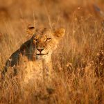 A Wild Romance – Wild Kenya