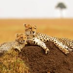 Into Africa: Fall in Love with the Sub Sahara