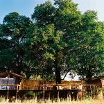 Camping in the Trees in Zambia