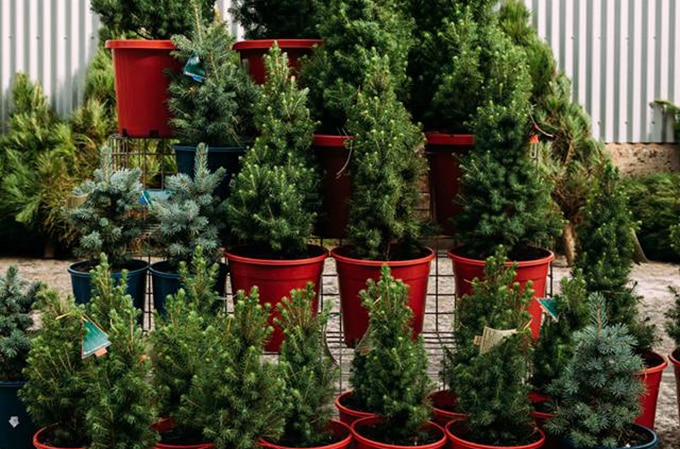 Carriageworks - christmas markets
