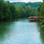 Top 5 Bohol Adventures for Nature Lovers