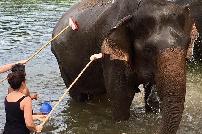 Elephant's World, Thailand