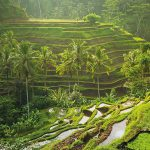 Why You'll Love a Romantic Getaway in Ubud