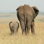 Top 5 Honeymoon Safaris in Africa
