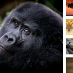 5 Animals to See in the Wild
