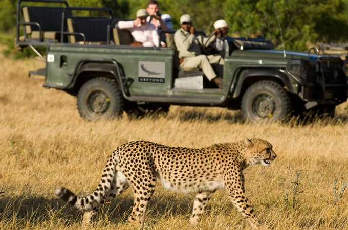 Big cat safari, south africa