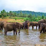 Jewels of the Indian Ocean – Sri Lanka