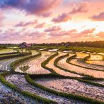 Bali like a local: 5 need-to-know spots