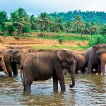 Asian Islands for Two – Sri Lanka