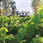 5 Romantic Wine Escapes