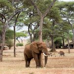Top 5 Places to Encounter Elephants
