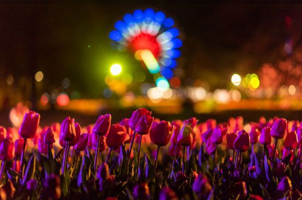 Experience Floriade after dark at NightFest. Photo: Floriade Australia