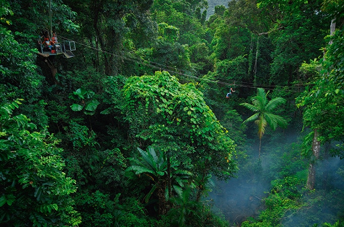 Daintree Jungle Surfing Canopy Tours