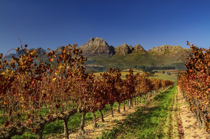 Drive South Africa's wine route