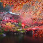 5 reasons to swap Kyoto's cherry blossoms for autumn leaves
