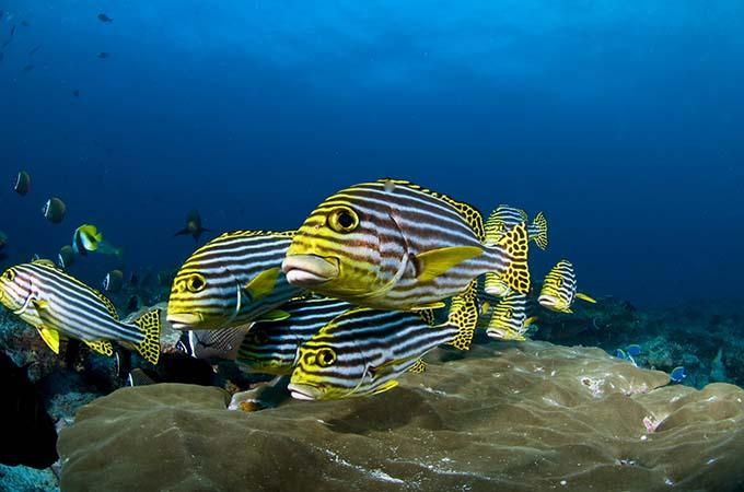 dive in the maldives