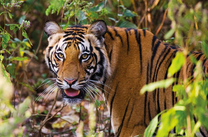 Hello, handsome! Enjoy two days in Singapore en route to your Inspiring India tour with Wendy Wu Tours