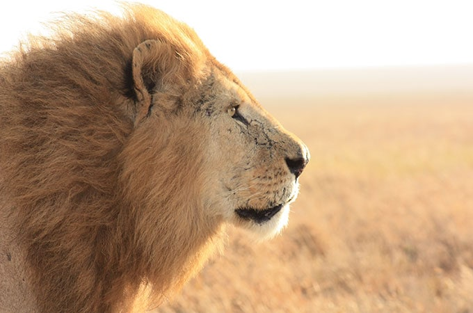 Who wouldn't want to linger longer with this lovely? Photo: Bridget Fogarty from Jenman Safaris