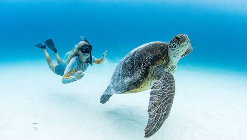 WEB-Lady-Elliot-Island-Eco-Resort_Jeremy-Somerville_Snorkelling-Turtles---Jeremy-Somerville