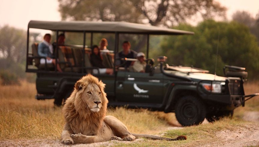 WEB-Lion-on-a-safari-game-drive-andBeyond-Sandibe-_2_Stevie-Mann