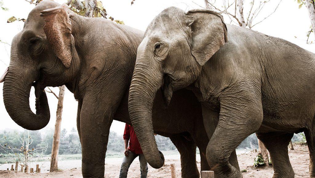 Elephants at MandaLao Elephant Sanctuary in Luang Prabang