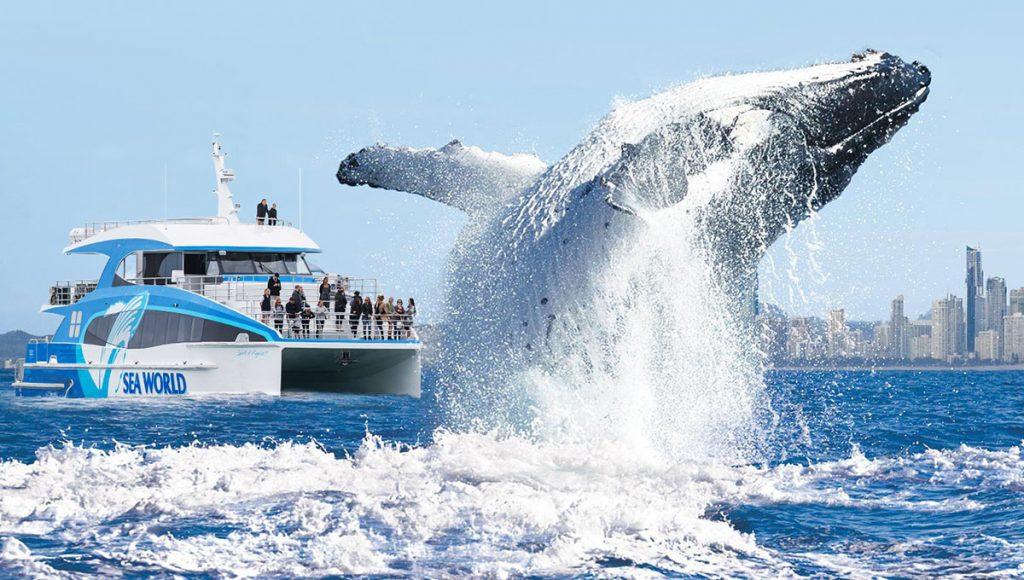 Sea World Cruises Gold Coast