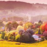 6 places to see amazing autumn leaves in Australia