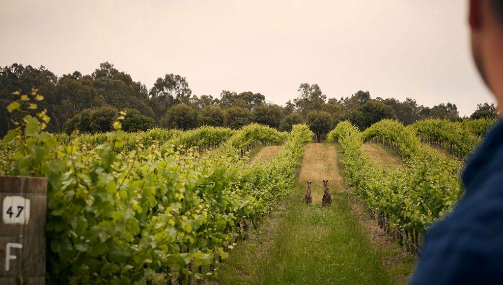 australian winery weekend - mitchelton hotel